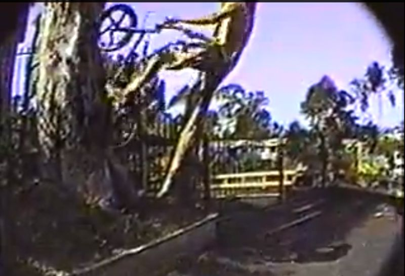 Brad Blanchard // Tree Ride // San Diego // Hoffman Bikes Headfirst